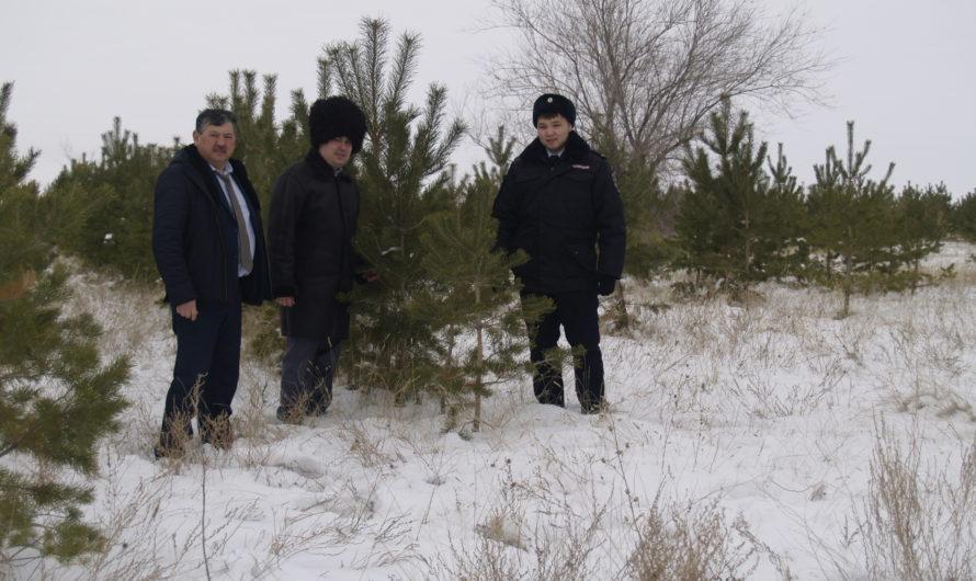 Сложный год для первомайских лесоводов